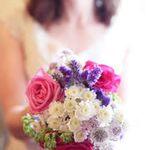 nicola@nicolahippisley.com profile image.