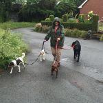 Papattes Dogwalking profile image.