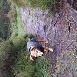 PAWS Adventure Walking Service  profile image.