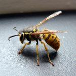 Pestaxe Pest Control profile image.