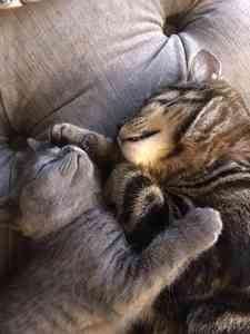 Photo by Petal Paws Pet Care