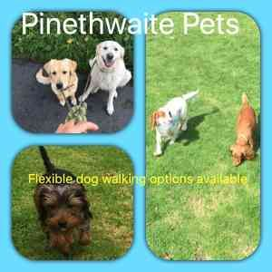 Photo by Pinethwaite Pets