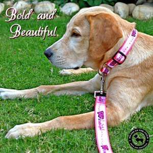 Photo by Best online pet accessories shop india - Heads Up For Tails