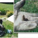 Protect Pest Control Ltd. profile image.