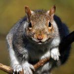 Rational Pest Control profile image.