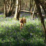 Grovelands Dog Walking & Home Boarding  profile image.