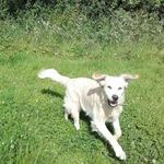 Rhias Walkies, Pet Sitting and small pet care profile image.