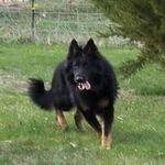 Sanitas PetCare  profile image.