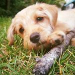Scotty's Doggies  profile image.