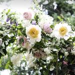 Serendipity Botanist Ltd. profile image.