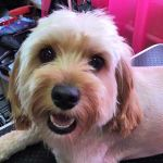 Tammy's Dog Grooming profile image.