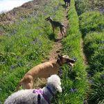 The Crate Escape  dog walking  profile image.
