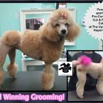 The UpScale Tail, Pet Grooming Salon, Naperville, IL profile image.