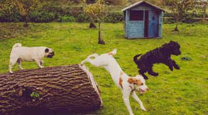 Photo by The Willow Tree Canine Daycare