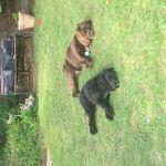 Top Dog Bearsden profile image.