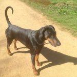 Waggy Walks profile image.
