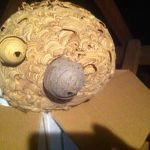 Wasp Nest Removal Caterham profile image.