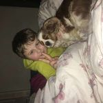Shrewsbury Pet Care by Sarah  profile image.