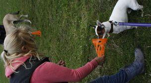 Photo by Woof 'n' Wag Dog Training