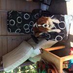 Woofpatrol Dog Walking and Pet Sitting Services Blackpool profile image.